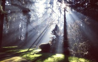 Find peace in the tranquil forest of the mind